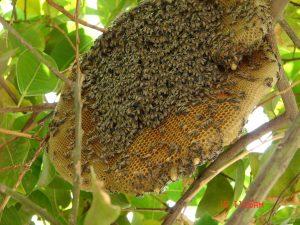 Mật ong rừng nguyên chất có để được lâu không?