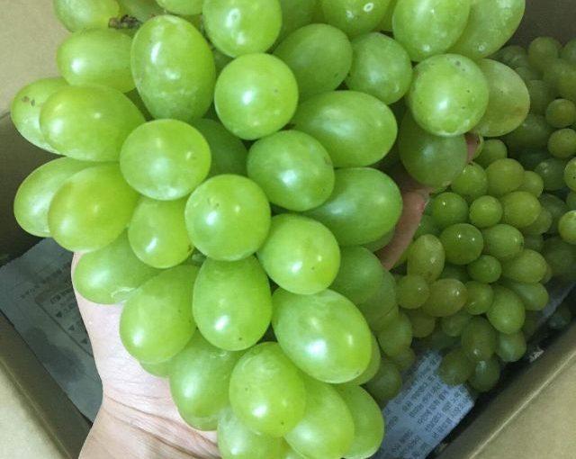 Bán nho xanh Ninh Thuận VietGap giá tốt tại Hà Nội