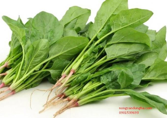 Tuyệt chiêu giảm cân đơn giản từ cải bó xôi cho người ăn kiêng