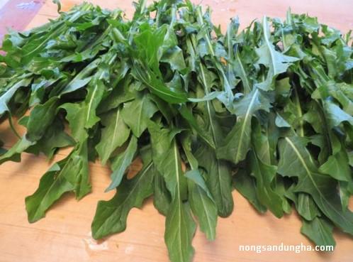 Tác dụng của rau xà lách rocket  – Mua rau rocket tại Hà Nội
