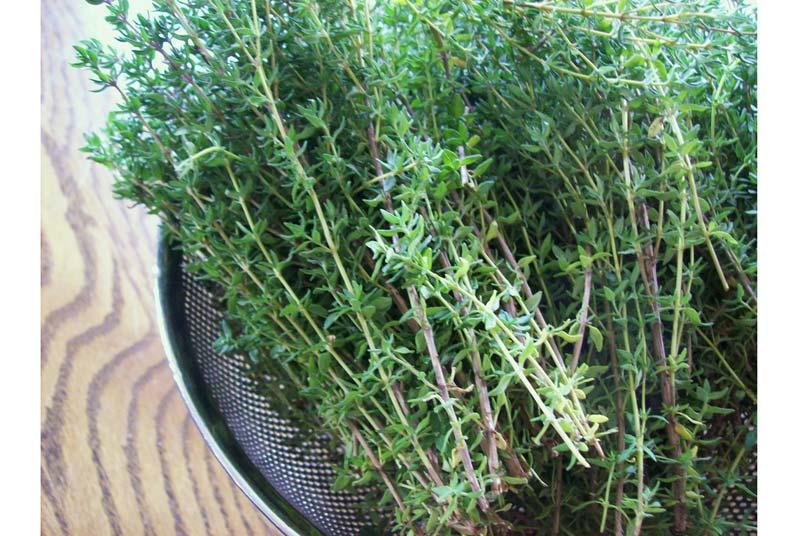 lợi ích bất ngờ của lá thyme