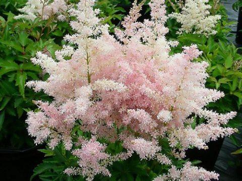 Bật mí những loại hoa lâu tàn trong dịp Tết cho tín đồ sành chơi hoa