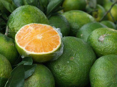 Mẹo vặt sức khỏe: Ăn nhiều cam sành có nóng không?