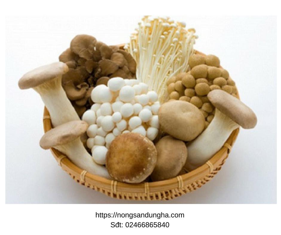 Khỏi bệnh đau dạ dày ngay mà không tốn kém vì ăn những loại nấm này