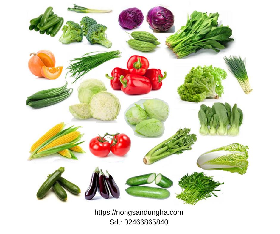 """Bật mí """"bí mật"""" ít ai biết khi trồng rau tại sạch, rau an toàn tại nhà cực dễ"""
