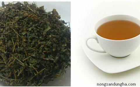 Cách sử dụng trà giảo cổ lam hiệu quả, phát huy tác dụng tuyệt vời
