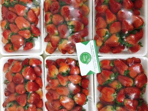 Người ốm ăn hoa quả gì có lợi cho sức khỏe nhanh khỏi bệnh nhất?