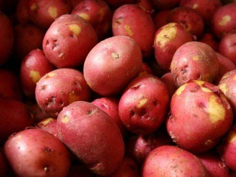 Địa chỉ mua khoai tây tại Hà Nội hàng chuẩn Đà Lạt uy tín chất lượng