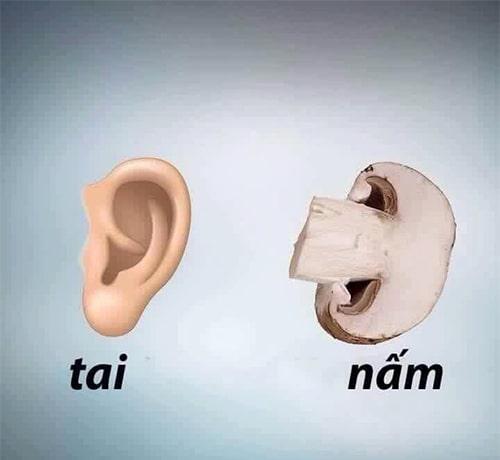 Nấm tốt cho tai