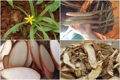 Đặc sản Hà Giang cây sâm cau