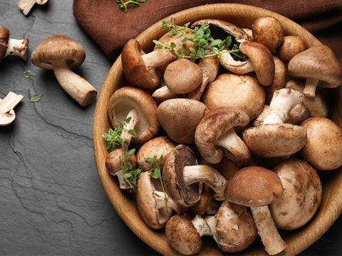 Top 9 loại nấm ngon tốt cho sức khỏe phổ biến tại Việt Nam